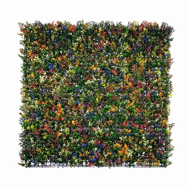 Buxus multi color Kunsthaag
