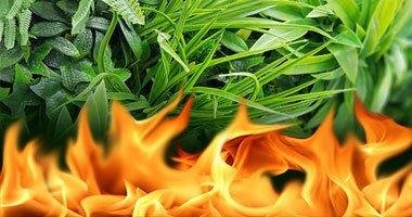 Kunsthaag plantenwand brandvertragende uitvoering materiaal klasse C klasse B