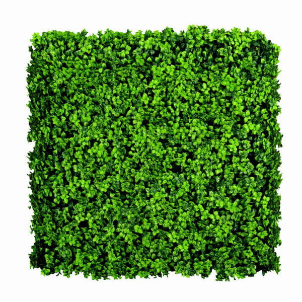 Leucodendron groen kunsthaag