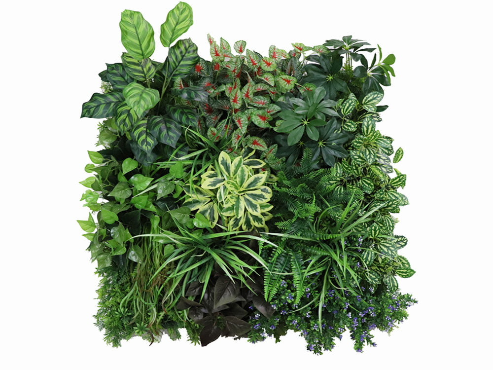 Vegetatie Euonymus Japonicus Plantenwand