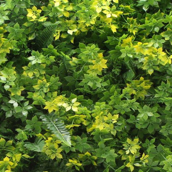 Vegetatie varen lineos kruid detail