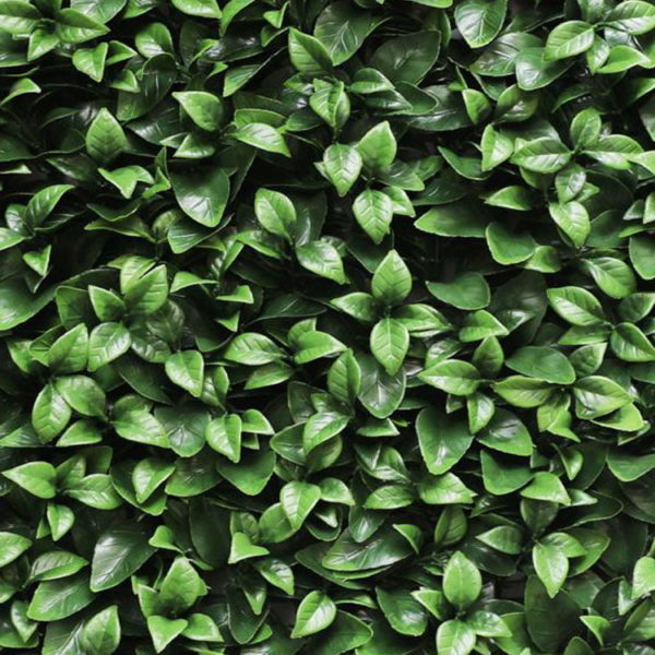 Gardenia kunsthaag detail