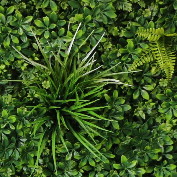 Vegetatie schefflera donker-Plantenwand-detail1