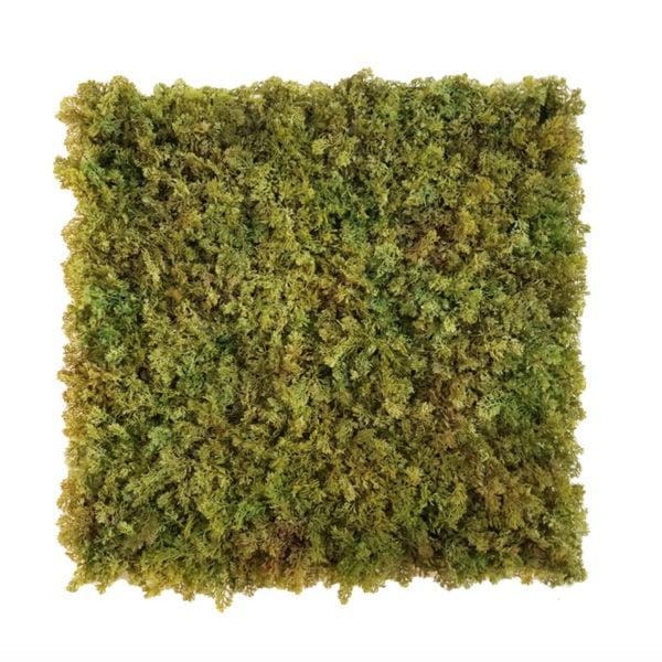 mos groen moswand 50x50cm mat