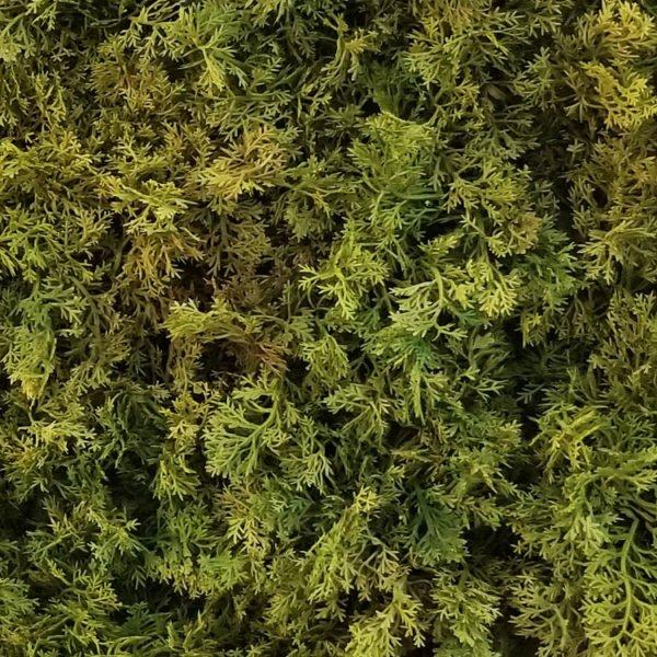 mos groen moswand 50x50cm mat detail